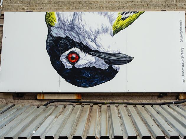 The Audubon Mural Project Paints a Milestone 100 Species