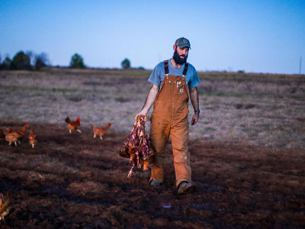 Daniel Coady, head of the poultry operation at White Oak Pastures, walks the farm at dusk to collect the remnants of chickens torn apart by eagles. Bryan Meltz