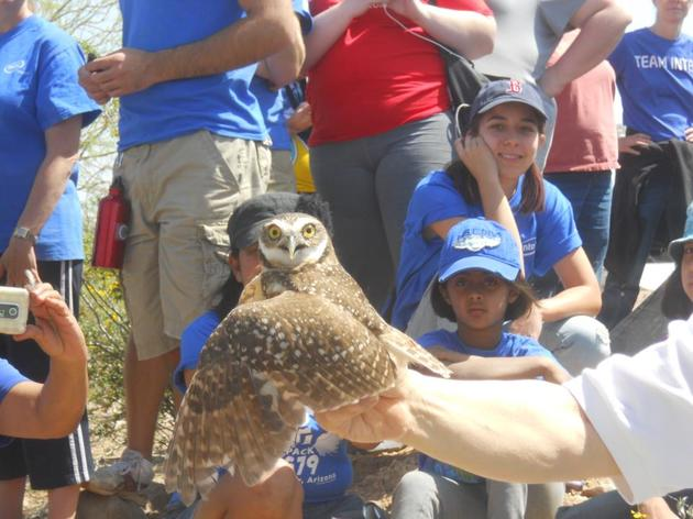 Audubon Arizona welcomes Burrowing Owls to the Rio Salado Habitat