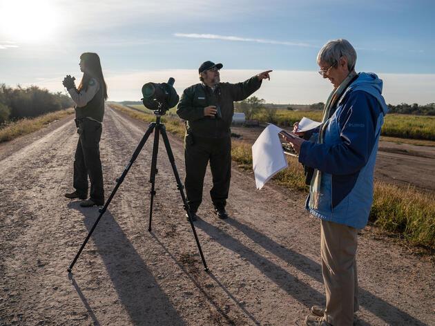 A Christmas Bird Count in the Rio Grande Valley of southern Texas. Verónica G. Cárdenas