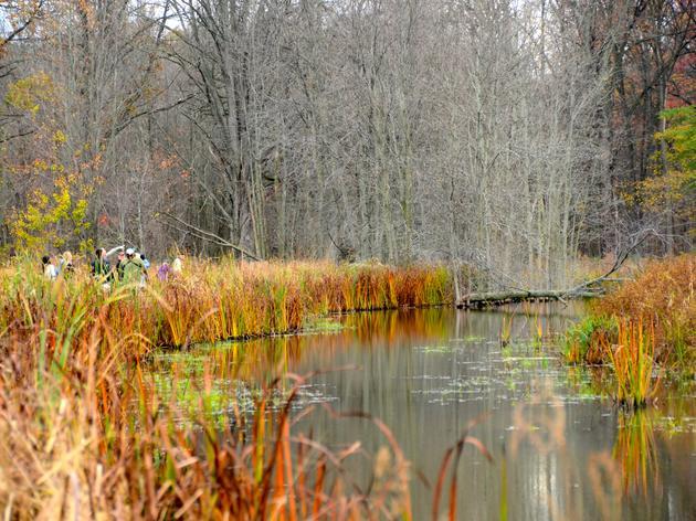 Seneca Meadows Wetlands Preserve Given Audubon Conservation Distinction