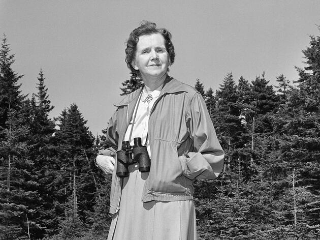 Rachel Carson, author of Silent Spring, at her summer home in Boothbay Harbor, Maine. CBS Photo Archive/Getty