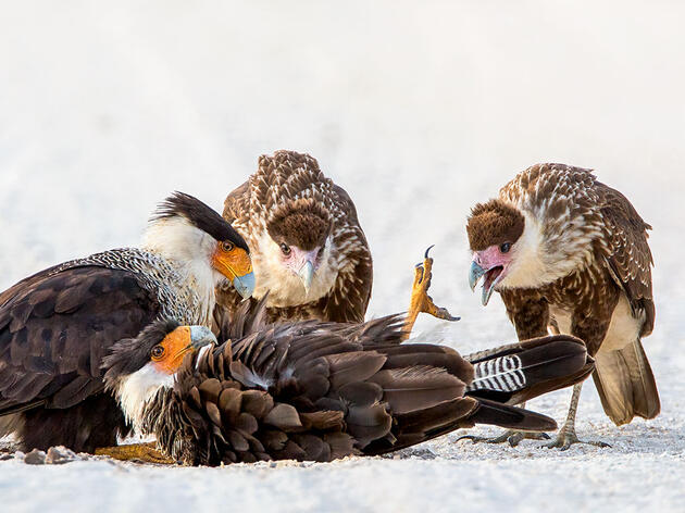 Our Favorite Fascinating Bird Behaviors From the 2020 Audubon Photo Awards