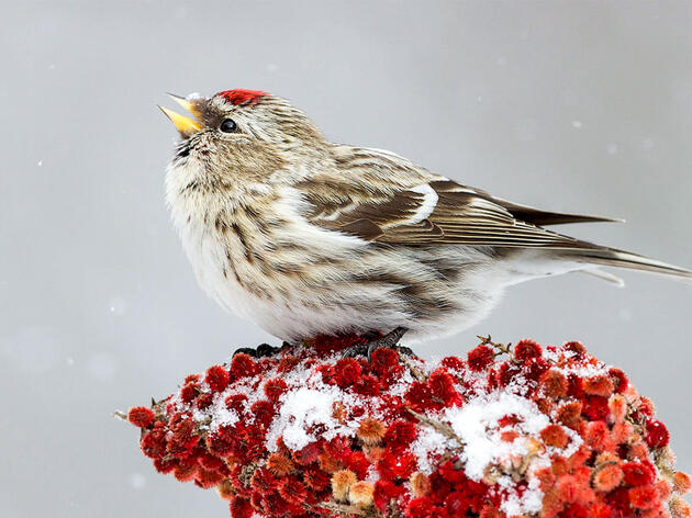 How Bird-Friendly Are Your Holiday Decorations?