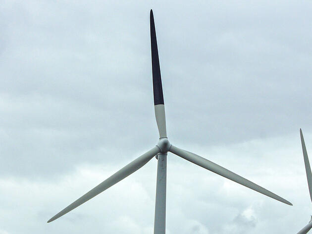 Can Painting Wind Turbine Blades Black Really Save Birds?