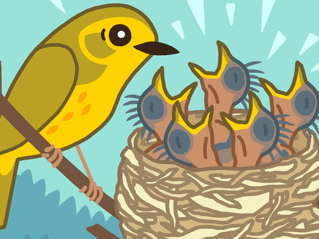 How to Make a Comic About Birds