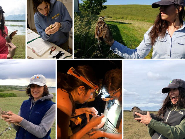 Tracking a Migratory Scientist: From Banding Birds to Global Bird Conservation