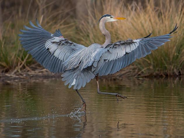 La legislación apoyada por Audubon beneficia a las aves y a los titulares de derechos de agua en Arizona