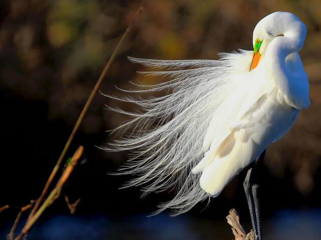 National Audubon Society Announces CEO David Yarnold to Step Down