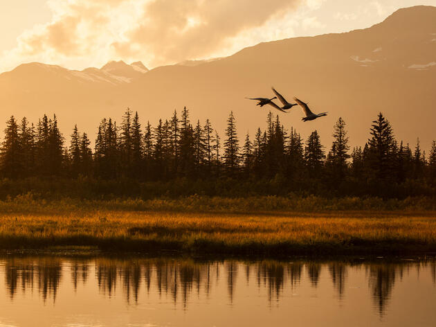 Audubon Files Lawsuit to Protect Migratory Bird Treaty Act