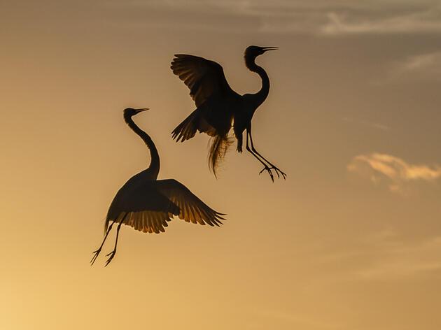 National Audubon Society Announces Additions to Senior Leadership Team