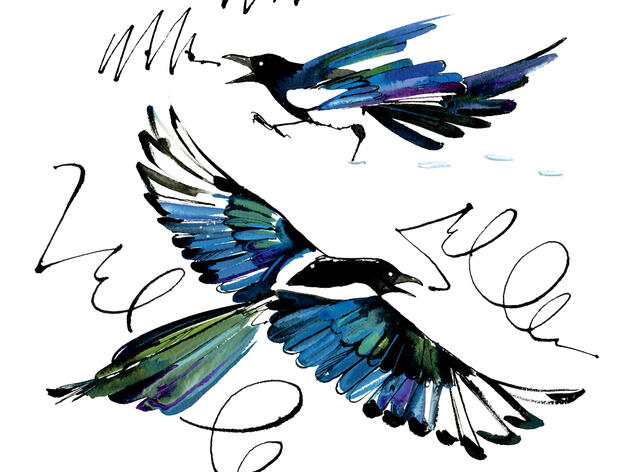 Reimagining the Black-billed Magpie