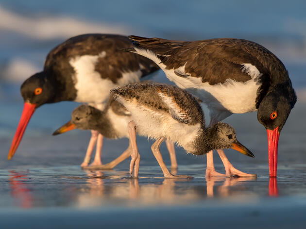 Green Light for Largest Offshore Wind Project in the U.S. is a Hopeful Restart for Birds