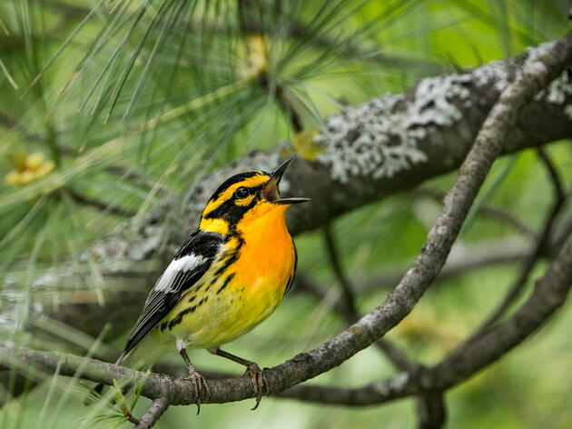 Policies to Rebuild Better for Birds and People Dominate the Week in Congress