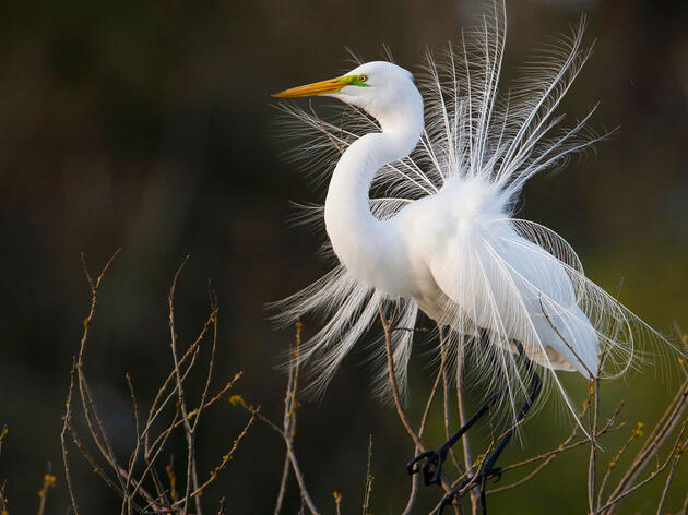 """National Audubon Society to Election Winners: """"Birds are telling us there is no time to lose for bold, equitable and durable action on climate."""""""