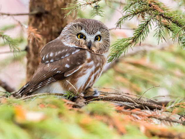 New 'Trillion Trees' Bill in Senate will Protect Birds While Making Progress on Climate Change