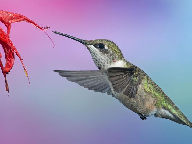 National Audubon Society Celebrates Resolution Declaring April Native Plant Month