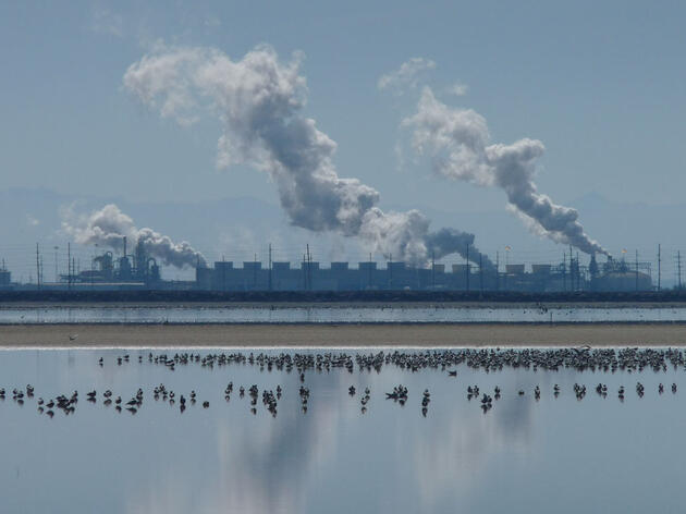 Flocks of gulls; a geothermal plant sits on the edge of the Salton Sea in southern California. Hart_Walker/iStock