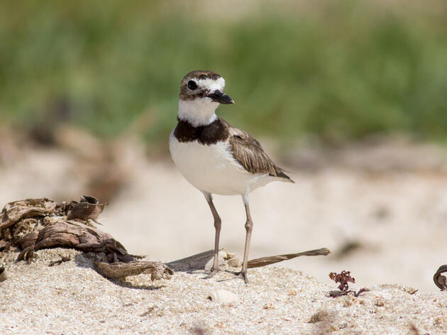 Louisiana Beach Rocked by Two Hurricanes is Ready for Nesting Birds
