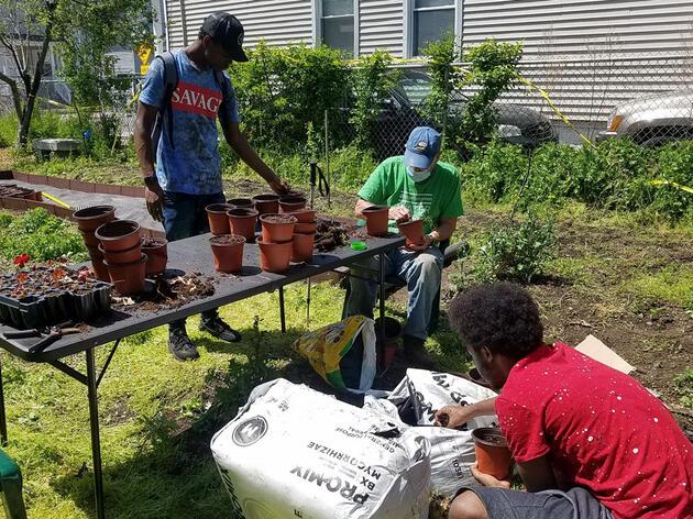 Khalif Johnson, from left, Dennis Riordan and Randall Fleming prepare seedlings for planting at the Urbanscapes Native Plant Nursery in New Haven, Conn. Courtesy of Menunkatuck Audubon Society