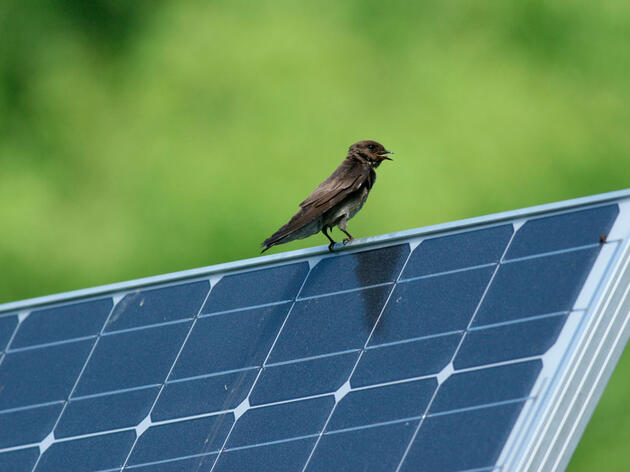 Solar Power and Birds
