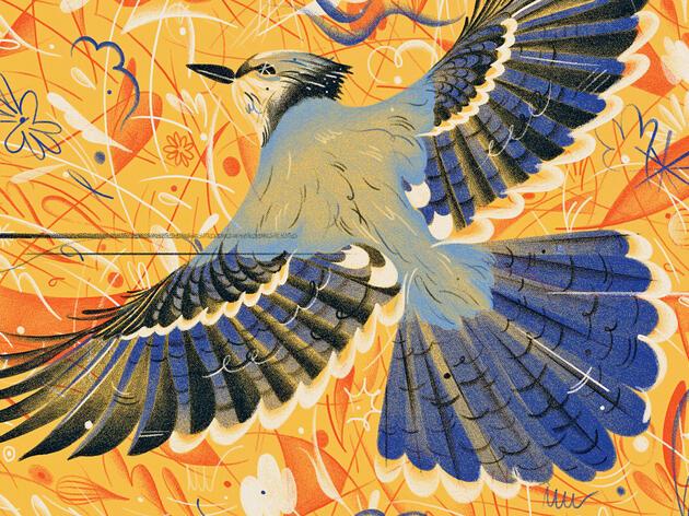Reimagining the Blue Jay