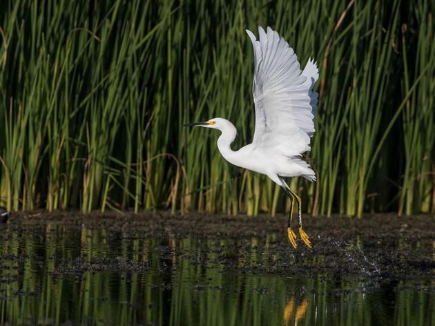 Priorizando la seguridad del agua para las aves y las personas de Arizona
