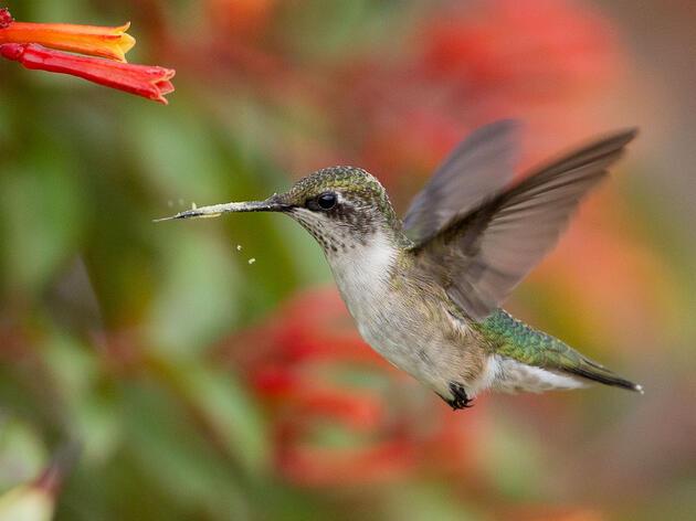 Hummingbird Pollination Practice