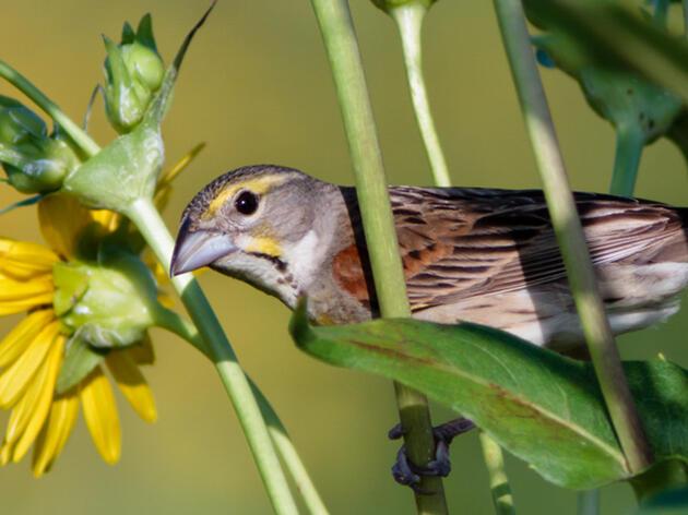 National Audubon Society Announces Largest Market-Based Regenerative Grasslands Partnership in the U.S.