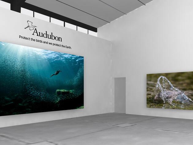 The 2020 Audubon Photography Awards virtual gallery.