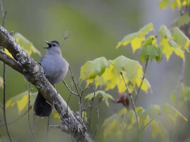How to Record Great Audio of Birds and Their Environments