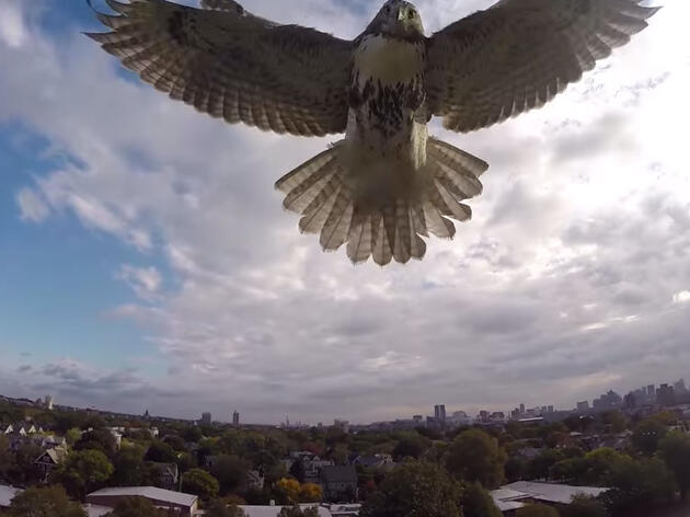 How Will Drones Affect Birds?
