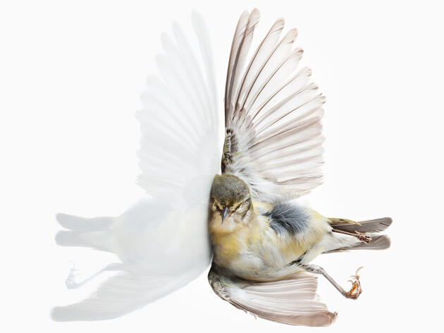 Bird vs. Building: Portraits of Flight Gone Wrong