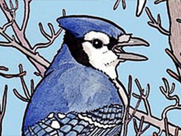 Are These Quirky Comics Launching a New Generation of Bird Enthusiasts?