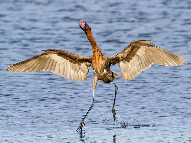 National Audubon Society Announces Comprehensive Gulf Restoration Plan