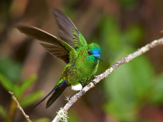 7 Hummingbirds That Wear Pants With Flair (Plus One Bonus)