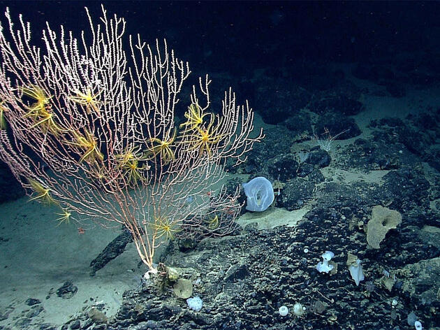 Zinke Proposes Opening Three Marine Monuments to Commercial Fishing
