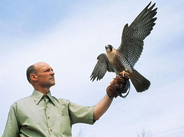 Remembering Tom Cade, the Father of Peregrine Falcon Conservation