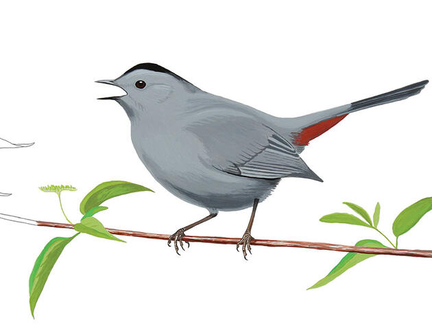 The Catbird Has a Simple Trick to Outsmart Brood Parasites