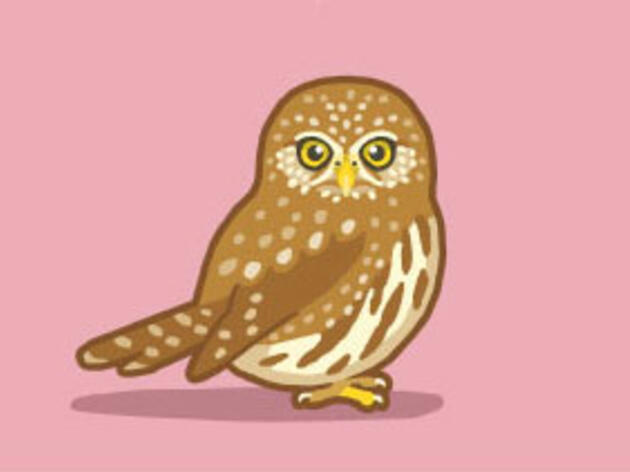 Why I Use Comics to Share My Love of Birds and Science