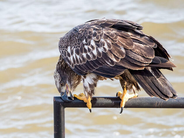 Here's Why Birds Rub Their Beaks on Stuff