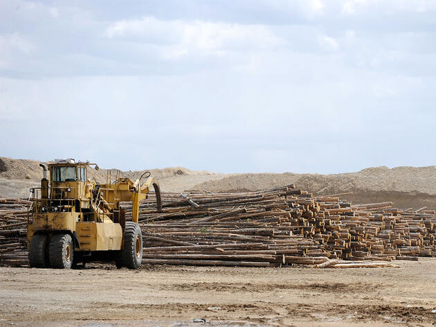 Let's Say It Again: Wood Pellets Are Not a Sustainable Fuel Source