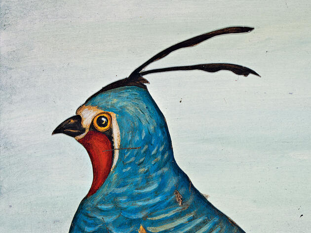 Un ave que vale la pena perseguir, incluso después de la muerte