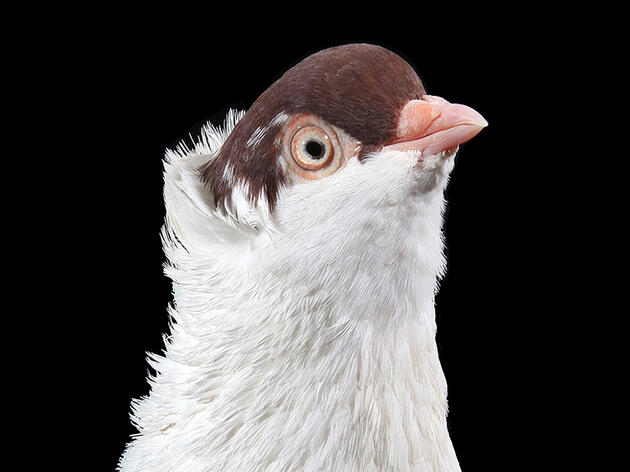 Pigeon Portraits Reveal the City Bird's True Beauty