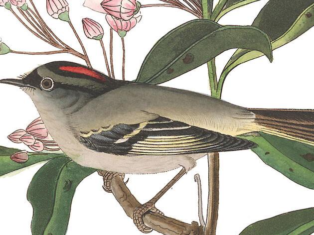 John James Audubon: Crazy, Wrong, or Neither?
