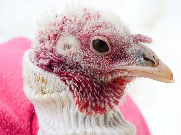 Want to Keep Rescued Birds Toasty? Dress Them Up.