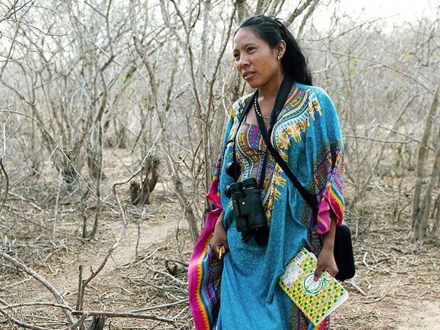 Más allá de la cortina de la coca: ¿puede el avistaje de aves construir una base económica en Colombia?