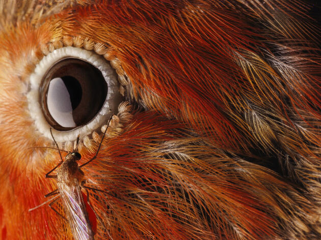 6 Horrifying Bird Plagues—and How to Stop Them
