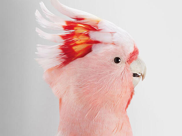 12 Charming Photos That Let You Get Up Close And Personal With Birds
