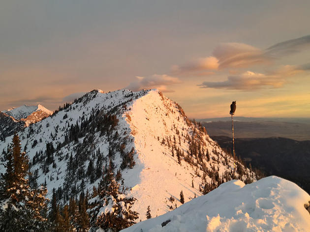 When Your Day Job Is Counting Eagles (and Other Awesome Birds of Prey)